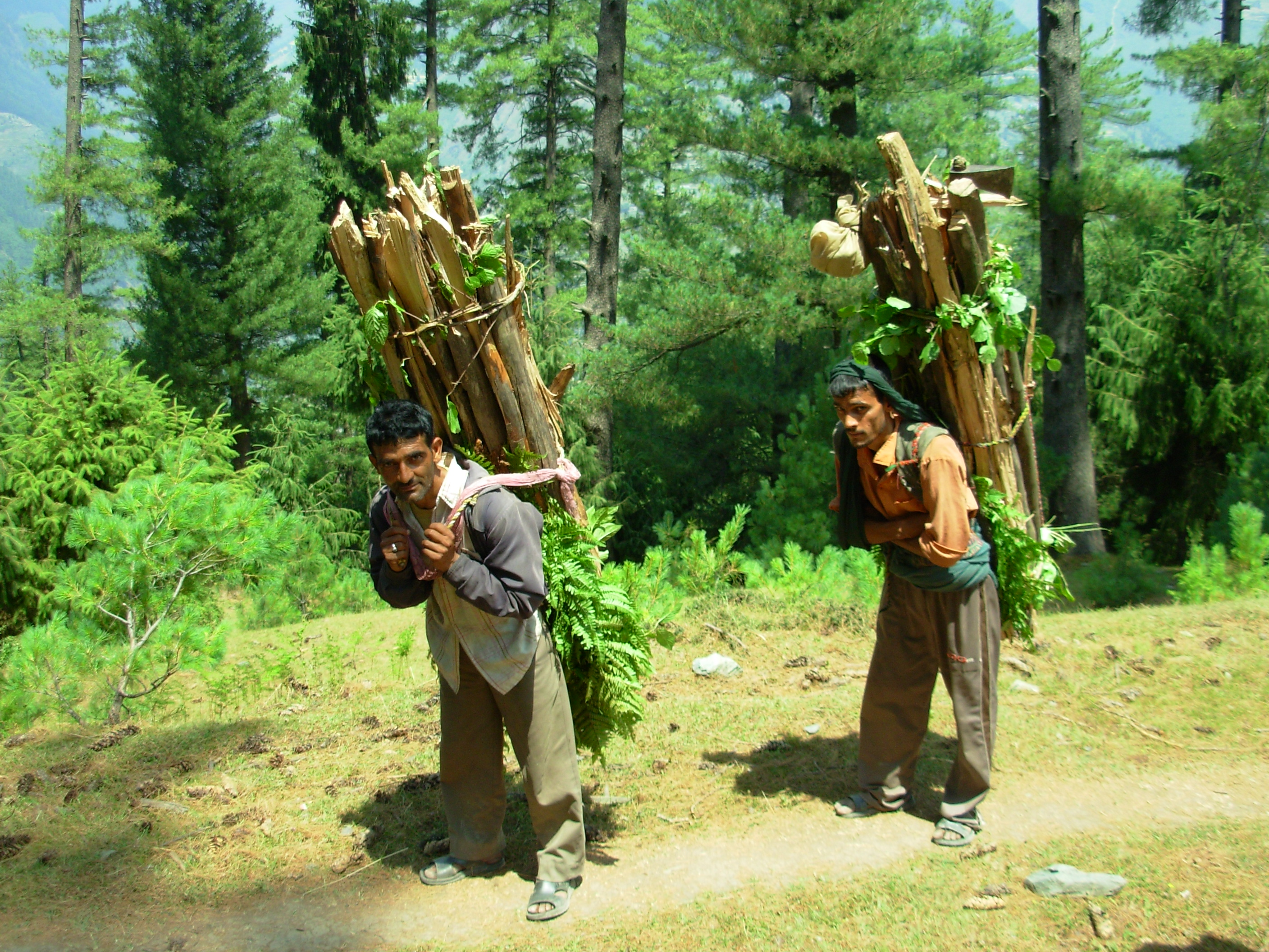 Forest Dependent Livelihoods
