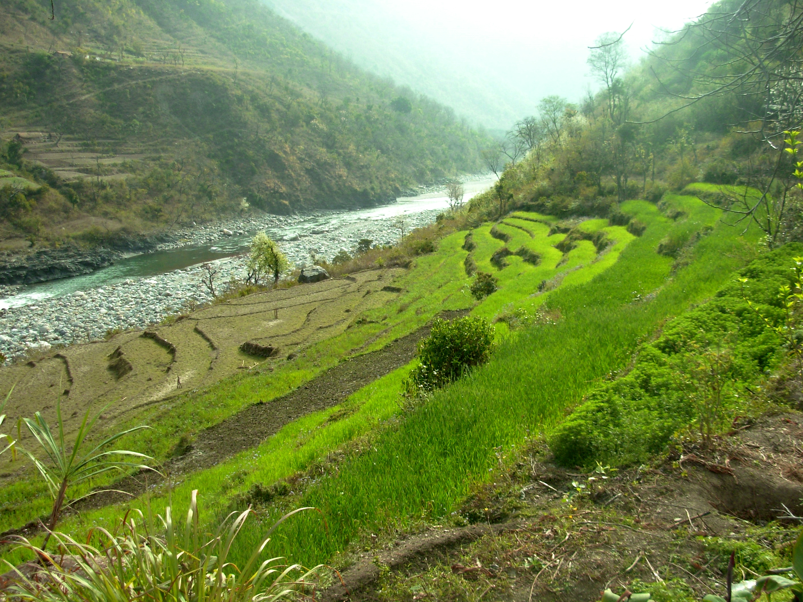 Commercially thriving agricultural will be affected as fields are submerged due to Renuka Dam.                                                                                                                                                  Pic Date : 24/02/2009
