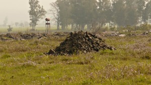 solid wastes dumps on agricultr field